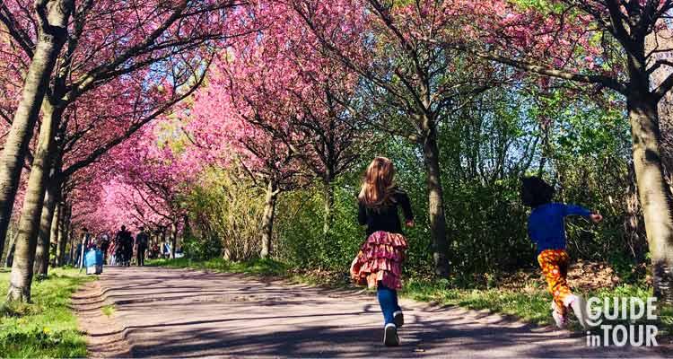 Bambini corrono lungo un viale alberato con alberi in fioritura. Il meteto di Berlino in primavera può essere piovoso e nelle giornate di sole tutti escono a camminare nei parchi.