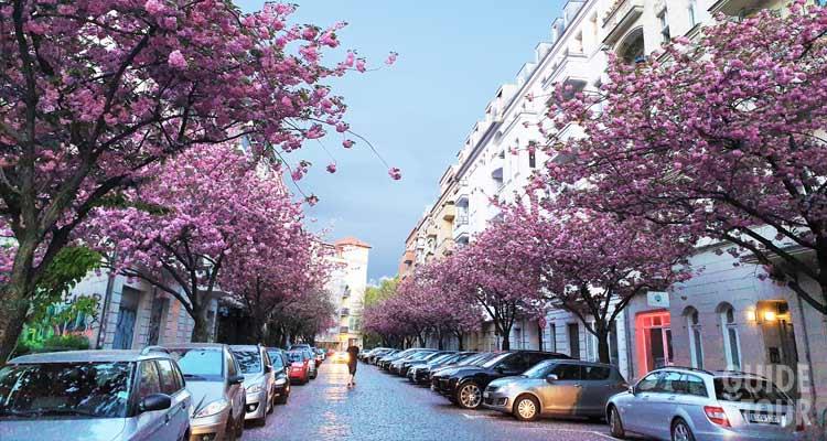 Alberi fioriti del quartiere di Prenzlauer Berg, una buona zona dove poter pernottare a Berlino.