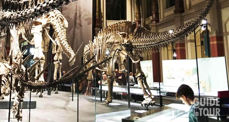 Scheletri di dinosauri esposti al museo di scienze naturali di Berlino