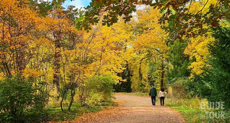 Un viale del parco del palazzo di Charlottenburg con due persone passeggiando in un tappeto di foglie autunnali.